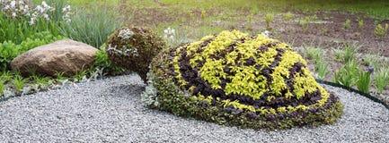 乌龟形状的灌木在修剪的花园庭院里 装饰公园庭院设计 网站的横幅 免版税库存图片