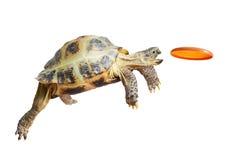 乌龟抓住飞碟 库存照片