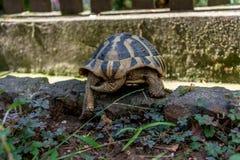 乌龟森林 库存图片