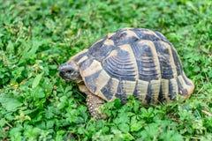 乌龟森林 免版税库存图片