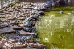 乌龟池塘 库存照片