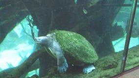 乌龟汤姆 免版税库存照片