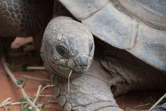 乌龟的题头 免版税库存照片