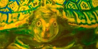 乌龟的画象-街道画在马尼拉菲律宾 图库摄影