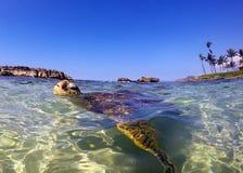 乌龟盐水湖 库存图片