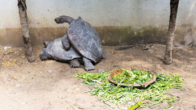 乌龟联接 免版税库存照片