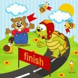 乌龟运动员奔跑 库存图片