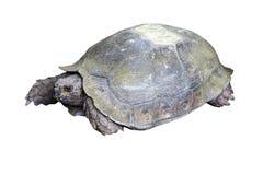 乌龟(选择的焦点)的眼睛与它的在土壤地面的整体 库存照片
