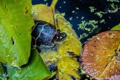 乌龟 库存照片