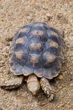 乌龟 图库摄影