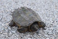 乌龟` s生活 库存照片