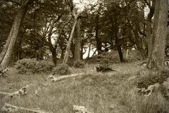 乌贼属口气的巴塔哥尼亚人的森林 3d美国美好的尺寸形象例证南三非常 库存照片