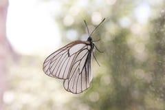 乏味的概念 一只蝴蝶 免版税库存图片