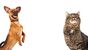 乐趣狗和猫与Copyspace 免版税库存图片