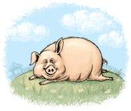 乐趣猪 免版税库存图片