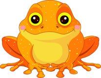 乐趣金黄蟾蜍动物园 免版税库存图片