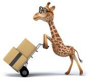 乐趣长颈鹿 库存图片