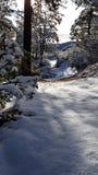 乐趣雪天在冬天妙境 免版税库存图片