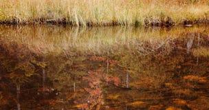 乔丹池塘,阿卡迪亚国家森林秋天颜色。 免版税图库摄影