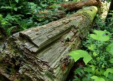 乔伊斯Kilmer国家森林 库存照片