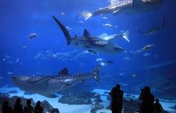 乔治亚水族馆,美国 库存照片