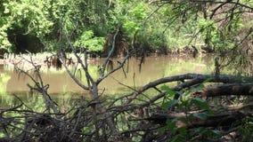 乔治亚,河沿公园,横跨比格克里克的部分的A平底锅与几棵死的树的在前面 股票录像