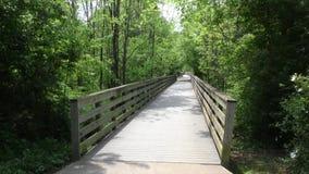 乔治亚,罗斯维尔公园,看在允许人横渡沼泽的一座步行桥下 股票录像