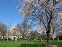 乔治城gravenor大厅大学白色 库存照片