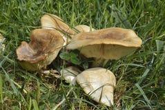 乔治蘑菇s st 免版税库存图片