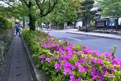 乔治Taber杜娟花桃红色花在开花期间的在Arashiyama晒干 图库摄影