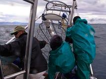 乘员组降低金属潜水者的鲨鱼笼子入Ganis海湾 库存照片