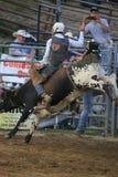 乘坐一头顽抗的公牛的野生西部圈地牛仔 库存图片