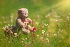 乘坐一辆桃红色三轮车的Teddybear 库存照片