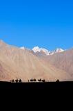 乘坐一头骆驼的人剪影在沙漠 免版税库存照片