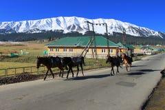 乘坐在他们的马的牛仔在古尔马尔格,印度 库存图片