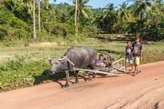 乘坐在家从的孩子与水牛一起使用 免版税库存图片
