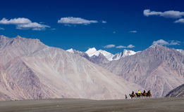 乘坐在沙漠和山的人民一头骆驼 免版税库存照片