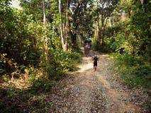 乘坐在迁徙在泰国的大象 免版税库存图片