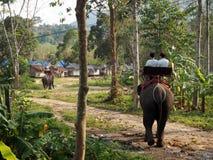 乘坐大象在酸值张在泰国 免版税图库摄影