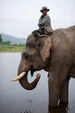 乘坐大象的泰国mahout 免版税库存图片