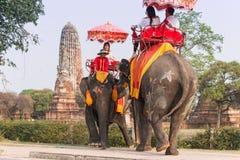 乘坐大象的游人在老城阿尤特拉利夫雷斯,著名为它的古庙 免版税库存图片