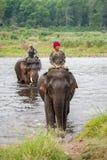 乘坐大象的Mahouts穿过河 免版税图库摄影