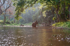 乘坐大象的Mahouts穿过河 免版税库存照片