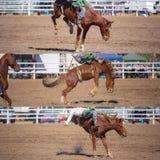 乘坐无鞍消除野马拼贴画的牛仔 免版税图库摄影