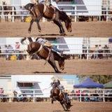 乘坐无鞍消除野马拼贴画的牛仔 图库摄影