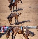 乘坐无鞍消除野马拼贴画的牛仔 库存图片