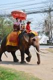 乘坐泰国大象的外国人旅行家在阿尤特拉利夫雷斯泰国游览 图库摄影