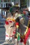 乘坐的驴在streetPets 动物, 免版税库存图片