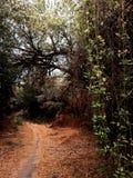 乘坐足迹在Chamna储备:亚基马三角洲, Richland,华盛顿 库存照片