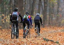 乘坐通过秋天森林的三个骑自行车的人背面图  库存图片